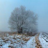 Зимняя акварель тумана :: Фёдор. Лашков