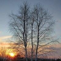 Полыхал берёзковый закат... :: Сергей Чернышев
