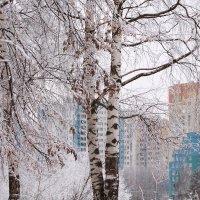 На Землю тихо опустилась зима, зима :: Татьяна Ломтева