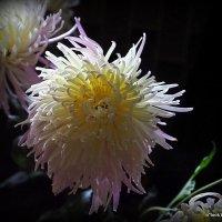 загадочный цветок :: Олег Лукьянов