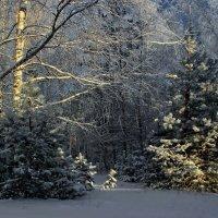 Освещая сумерки лесные... :: Лесо-Вед (Баранов)