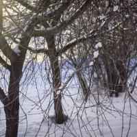 Зима :: Роман никандров