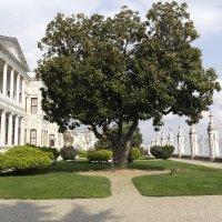 И дерево там, ВО :: saslanbek isaev