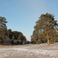 Реликтовый лес :: Олег Афанасьевич Сергеев