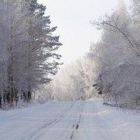 Дорога домой через лес) :: ТатА ДемИ