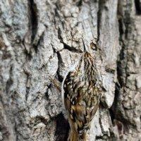 Найди птичку. :: Светлана Ивановна Медведева