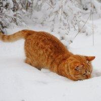 Мышка , выходи ! :: Иван
