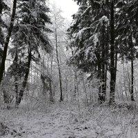 зимний день :: Светлана ***