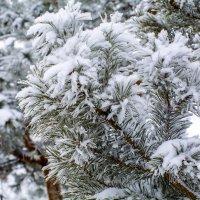 Зима :: Гульнара Шафиева