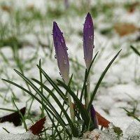 На снегу :: Alexander Andronik