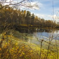 У лесного озера :: Сергей Цветков