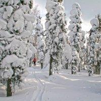 Лыжная прогулка по зимней тайге :: Галина Ильясова
