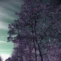 Инфракрасная аллея :: Alexander Varykhanov