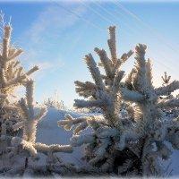 Крещенские морозы.. :: Александр Шимохин