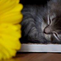 Спят усталые игрушки :: Татьяна Евдокимова