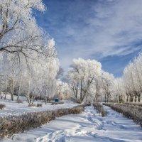 winter morning in the park :: Dmitry Ozersky