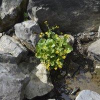 цветок :: Ирина Русакова