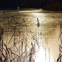 Морозным утром на озере :: Маргарита Батырева