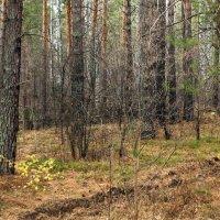 Осенний лес :: Олег Афанасьевич Сергеев