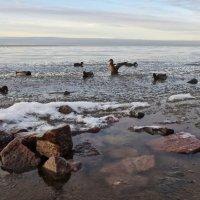 зимой на заливе :: Елена