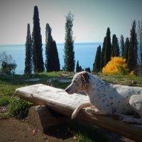Животные Абхазии :: Юлия Ненахова