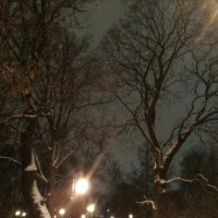 Вечерняя аллея в Александровском саду. (Январь, 2018 г.). :: Светлана Калмыкова