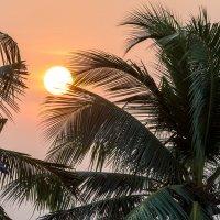 Шри Ланка. Вечер. :: Oleg