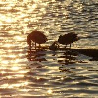 Утки на фоне заходящего солнца :: Татьяна Сапрыкина