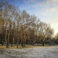 первый снег :: Марина Ринкашикитока