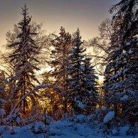 Вечер в лесу :: Анатолий Иргл