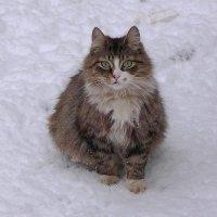 Никак не сообразит, радоваться выпавшему снегу или... :: Маргарита Батырева