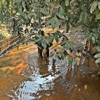 Я  предпочитаю  смотреть на слонов с  безопасного  расстояния! :: Виталий Селиванов