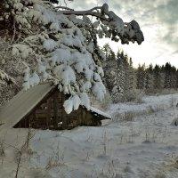 Под белым покрывалом января :: Swetlana V
