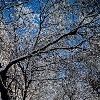 Зима 2018 Фото№2 :: Владимир Бровко
