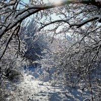 Зима-2018 Фото№4 :: Владимир Бровко