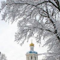 Коллегиум зимой :: Сергей Тарабара