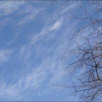 Перистые облака в январе :: Нина Корешкова