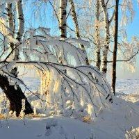 Белые пряди берёз :: Геннадий Ячменев
