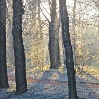 зимний солнечный день в парке :: Елена