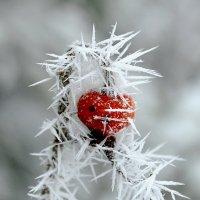 Забавы мороза :: Алексей .