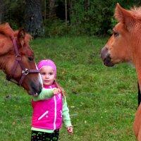 В гостях у лошадей :: Светлана