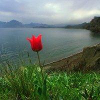 Найди свой аленький и сказочный цветочек :: viton