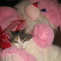 Кошечка :: OLLES