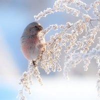Зарисовки из зимнего луга 2 :: Влад