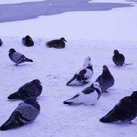 На морозе  в сидячей позем... :: Лариса Корженевская