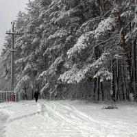зимняя прогулка :: оксана
