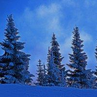 морозный день :: леонид логинов