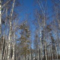 Дорога в лесу . Сибирь . -36 :: Мила Бовкун