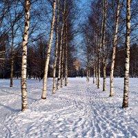 Морозный день Января. :: Марина Харченкова