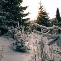 холодное солнце января... :: леонид логинов